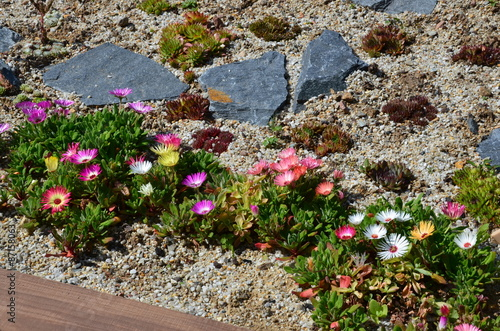 Bunte Blumen blühen im Steingarten\