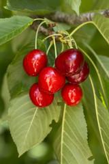 Fotobehang Vruchten Kiraz