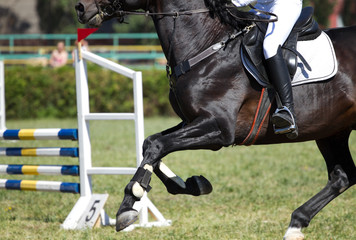 Horse jump in competition