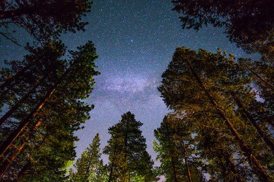 Milky way over redwood trees, near south Lake Tahoe, California.