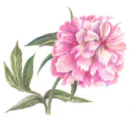 Flower peon