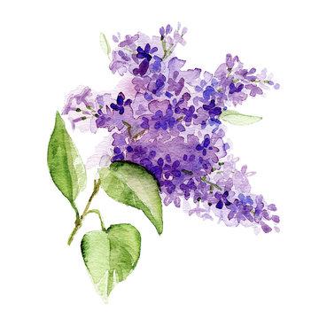 Watercolor lilac branch
