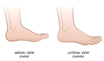 Feet - medial view (inside) and lateral view (outside). Isolated vector illustration on white background.