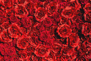 Red color fabric roses background