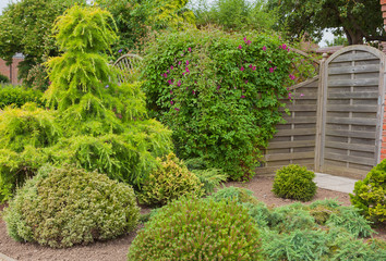 Evergreen shrubs and trees in a garden corner