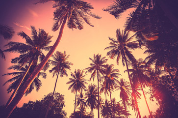 Poster Beach Vintage toned palm tree silhouettes at sunset.