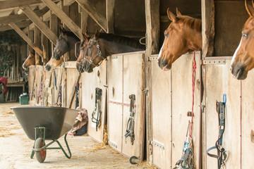 Pferde in Boxen auf einem Reiterhof