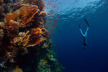 Wall Mural - Freediver in the sea