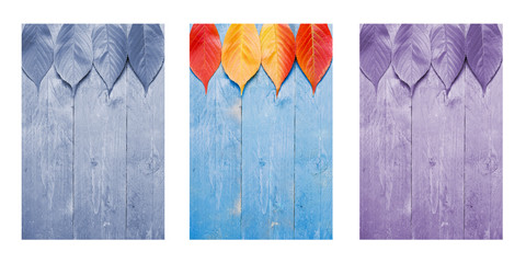 Colourful leafs on blue, wooden background. Triptych in blue,purple and nature colours. Wall mural