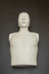 Model of dummy used for CPR training.