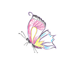 Beautiful, butterfly, vector, sketch style