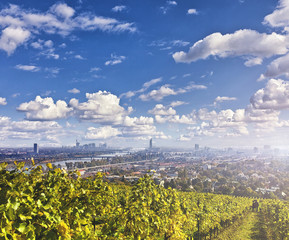 Foto op Aluminium Wenen View of the Danube River and the skyline of Vienna with Vineyards in front