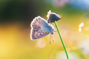 Butterfly Summer