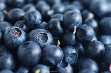 Fresh berries of bilberry. Background from bilberry