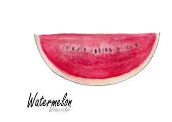 Watermelon.Hand drawn watercolor painting on white background.Vector illustration