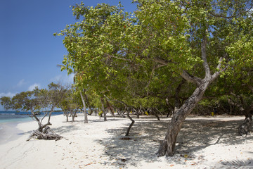 Morrocoy National park, a paradise with coconut trees, white san