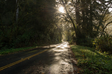 American road through the forest