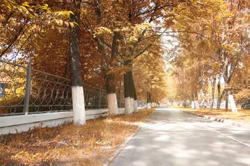 landscape park in the city autumn