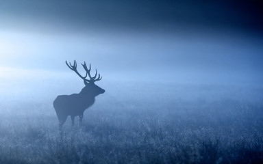 Moonlight. a red deer stag shilloette in the moonlight