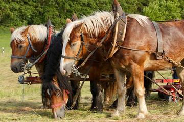 Arbeitspferde