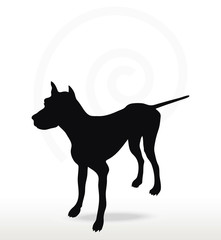 dog silhouette in still pose