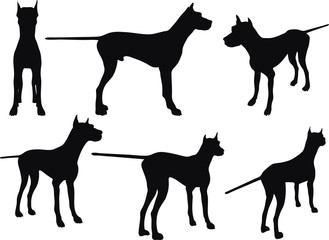 dog silhouette in still pose
