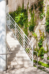 Stairs near the green creeper plant on brick wall