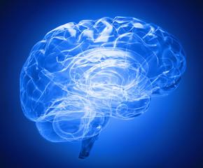 transparent brain