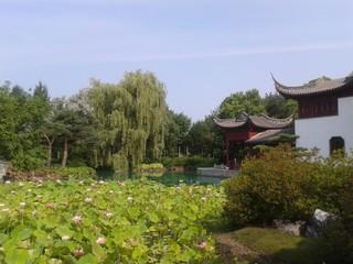 Arbre tombant sur le jardin de Chine