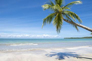 Curving palm tree casting shadow on bright empty Brazilian beach in Bahia Nordeste Brazil