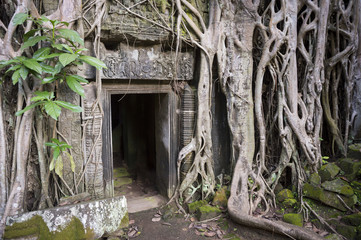 Angkor Wat jungle temple Ta Prohm dark entrance ruins overgrown with the roots of strangler fig trees