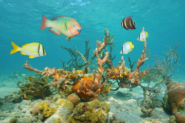 Colorful sea life underwater with tropical fish