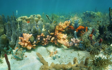 Colorful sponges underwater in a coral reef