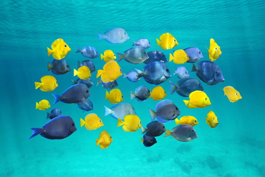 Colorful school of tropical fish below surface