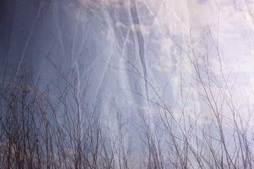 double exposure photo of tree branches in fall against sky