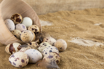 Quail eggs on an old background