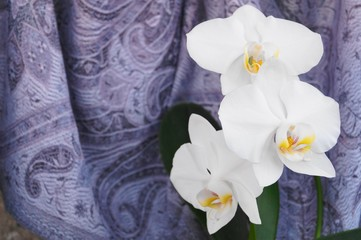 White orchids on purple background