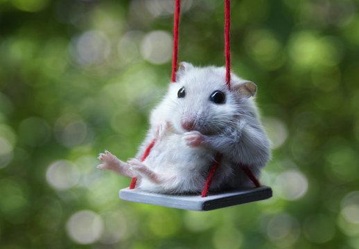 Hamster on a swing