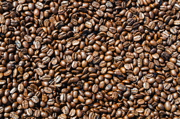 Coffee beans drying in the sun can be used as a background