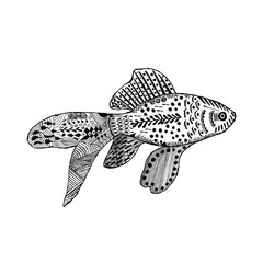 Zentangle stylized goldfish. Animal collection. Hand Drawn doodle isolated on white background. Graphic print for your design. Sketch for tattoo or t-shirt. Vector illustration eps 8.