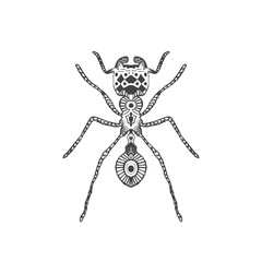 Zentangle stylized ant. Animal collection. Hand Drawn doodle isolated on white background. Graphic print for your design. Sketch for tattoo or t-shirt. Vector illustration eps 8.