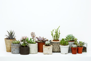Veriety of Succulents and Cactus in different concrete pots on t