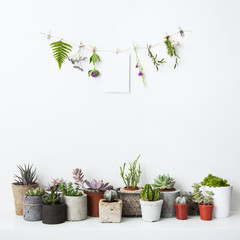 Mock up with hanging flowers and potted cactus and succulents. H