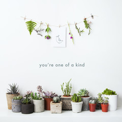 Motivational poster You are one of a kind with succulents and fl