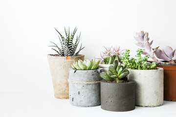 Succulents and cactus in different concrete pots on the white sh