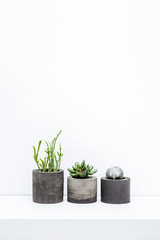 Three succulents in concrete pots over white background on the s