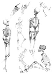 Sketch of skeletons - vector illustration