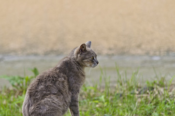 Portrait of young cat sitting in the village yard