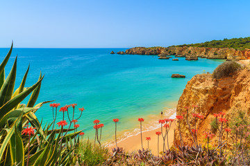 Tropical flowers on beautiful Praia da Rocha beach, Algarve region, Portugal Fototapete