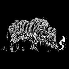 winter boar